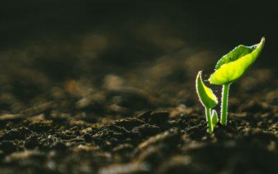 Soil Sampling